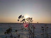 Ciel Bush de Sun Image stock