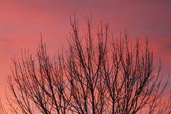 Ciel chinook Photos libres de droits