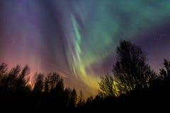 Ciel coloré de lumières du nord au-dessus des arbres Image libre de droits