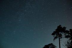 Ciel complètement des étoiles au-dessus des arbres photos libres de droits