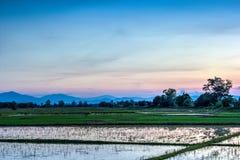 Ciel crépusculaire sur le gisement de riz Images libres de droits