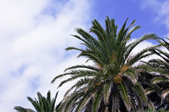 Ciel d'été de palmier Photo libre de droits