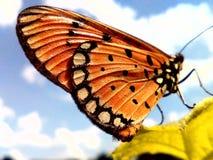 Ciel d'aile Photos libres de droits