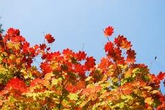 Ciel d'automne image libre de droits