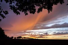 Ciel d'automne ou d'été de coucher du soleil avec des arbres Images stock