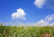 Ciel d'herbe de prairie image stock