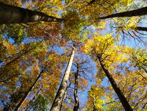 Ciel dans la forêt Photo stock