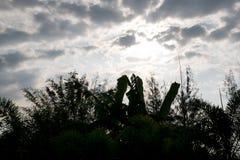 ciel dans le temps de matin avec l'arbre de silhouette Photographie stock