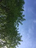 Ciel dans les arbres images stock
