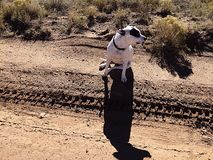 ciel das Hundeaufpassen Stockfoto