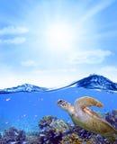 Ciel de Coral Reef Fish Turtle Ocean Photos stock
