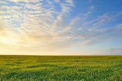 Ciel de coucher du soleil au-dessus du champ vert images stock