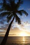 Ciel de coucher du soleil avec le palmier. Photographie stock libre de droits