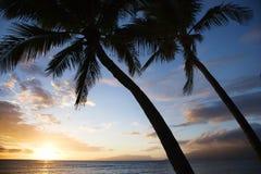 Ciel de coucher du soleil avec le palmier. Images libres de droits