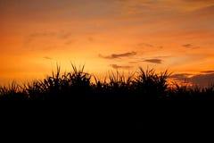 Ciel de coucher du soleil derrière l'herbe photo stock