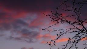 Ciel de coucher du soleil et silhouette pourpres d'arbre Photographie stock libre de droits