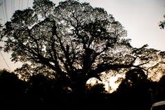Ciel de coucher du soleil par l'arbre Image stock