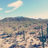 Ciel de désert Photo stock