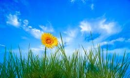 ciel de fleur Images stock