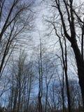 Ciel de forêt Photographie stock