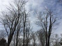 Ciel de forêt Photographie stock libre de droits