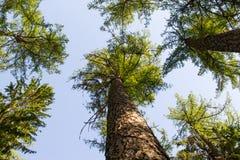 Ciel de forêt photos libres de droits