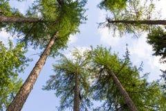 Ciel de forêt Image libre de droits