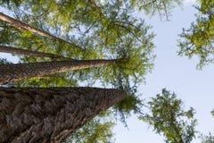 Ciel de forêt Images libres de droits