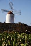 Ciel de l'Afrique de moulins à vent de cactus Image stock