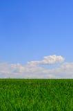 Ciel de l'herbe n Photos libres de droits