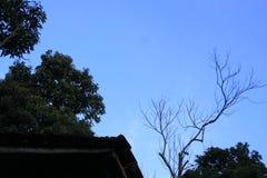 Ciel de matin dans mon arrière-cour si impressionnante Photo stock