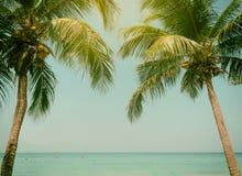 Ciel de mer de plage de noix de coco de palmiers pendant l'été du vintage de vacances modifié la tonalité Image libre de droits