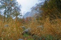 Ciel de montagne d'arbres d'herbe Photos stock
