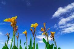 Ciel de nuage d'Orquid Image libre de droits