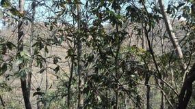 Ciel de paysage de paix d'arbre de nature images libres de droits