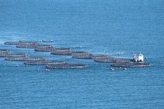 Ciel de poissons Photos libres de droits