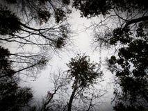 Ciel de Septemper Image libre de droits