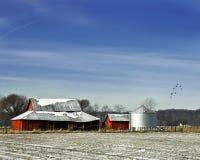 ciel de sihlo de rouge bleu d'oiseaux de grange photos stock