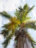 Ciel des tropiques Images stock