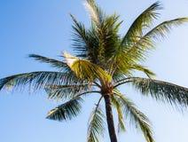 Ciel des tropiques Photographie stock libre de droits