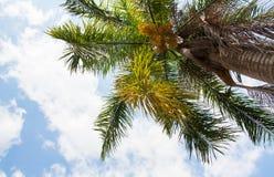 Ciel des tropiques Photographie stock