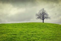Ciel dramatique au-dessus de vieil arbre isolé Images stock
