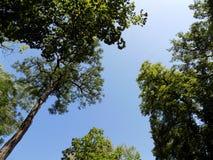 Ciel en été Photo stock