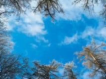Ciel encadré par des cimes d'arbre d'hiver photos stock