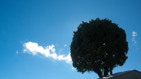 Ciel et arbre Photo libre de droits