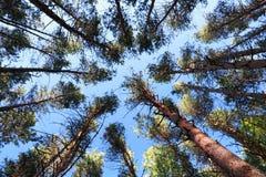 Ciel et arbres Photos stock