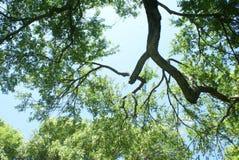 Ciel et arbres Photo stock