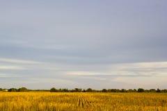 Ciel et champ du Kansas Images stock