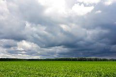 Ciel et champ orageux photographie stock libre de droits