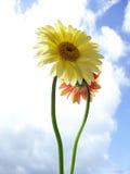 Ciel et fleur Image libre de droits